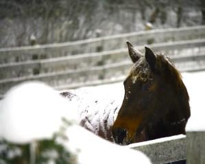 Horse Listening - horse benefits
