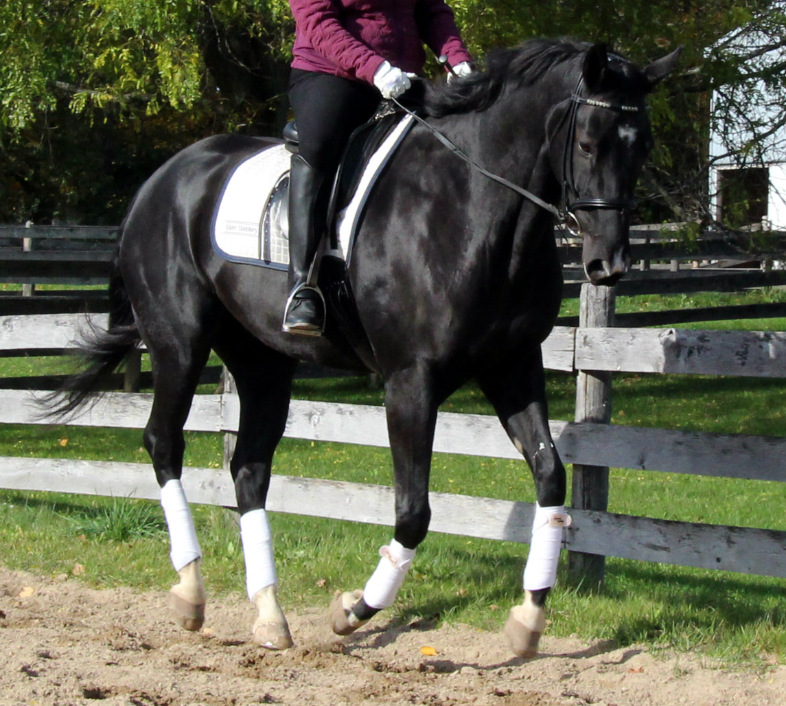 What Are The Leg Aids For Canter?
