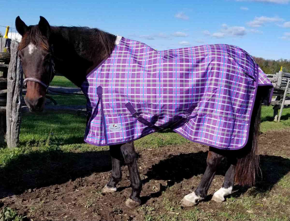THE Blanket Rule For Blanketing Horses