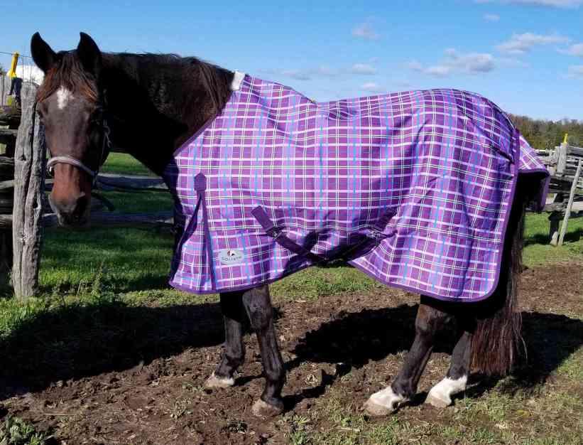 Blanket Rule for Blanketing Horses