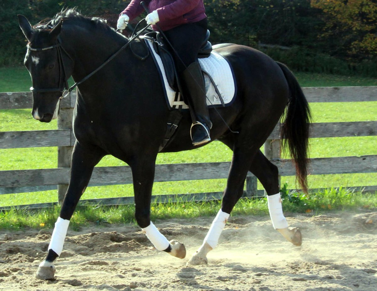 12 Riding Quick Tips - #6: Developing Impulsion