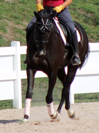 mild bend horse riding