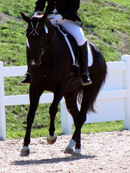 trot canter transition