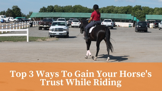 Top 3 Ways To Gain Your Horse's Trust While Riding