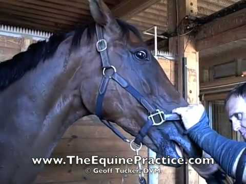 "Geoff Tucker, DVM and Horsemanship Dentistry™ - ""The Bit Seat"" video 4 of 8"