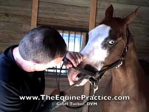 "Geoff Tucker, DVM and Horsemanship Dentistry™ - ""The Upper Left"" - video 5 of 8"