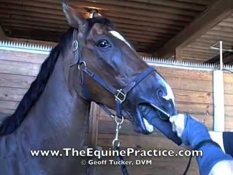 "Geoff Tucker, DVM and Horsemanship Dentistry™ - ""The Hand As A Speculum"" - video 7 of 8"