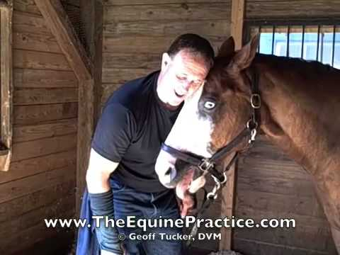 "Geoff Tucker, DVM and Horsemanship Dentistry™ - ""The Finish"" - video 8 of 8"