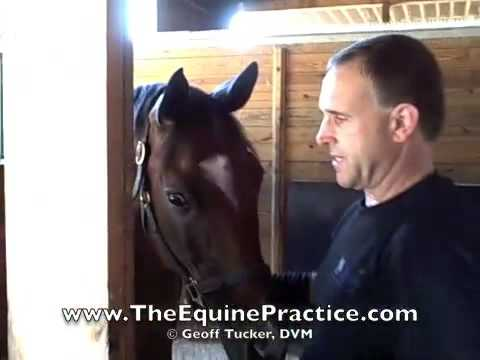"Geoff Tucker, DVM and Horsemanship Dentistry™ - ""The Approach"" video 1 of 8"