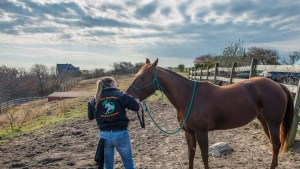 Equine Dentistry Without Drama and Horsemanship Dentistry