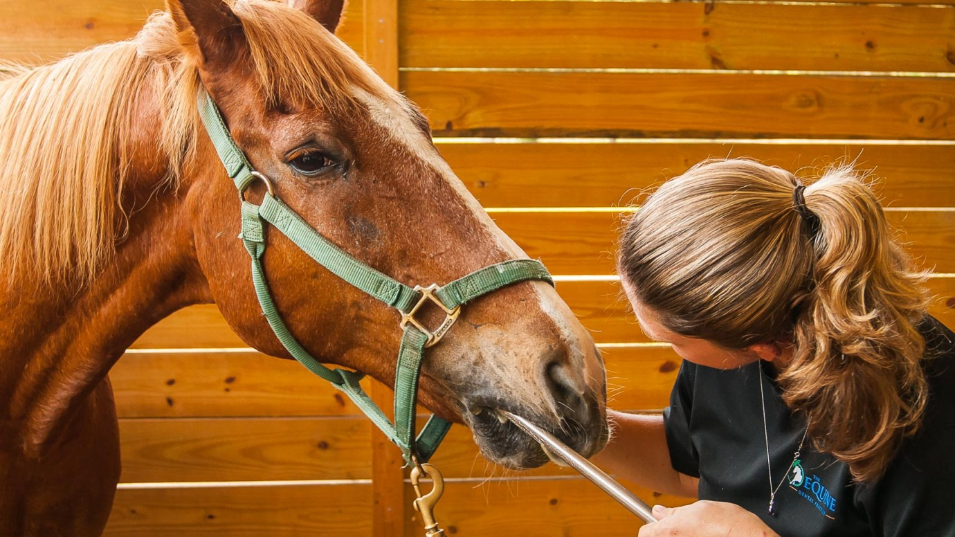 Horsemanship Dentistry - A Style Of Equine Dentistry For All