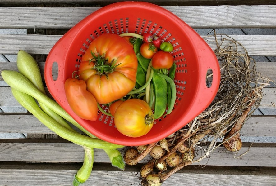 Shallot Harvest | Horseradish & Honey