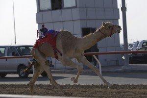 camel paulsmoke0K9A2071