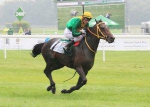 Zayed Cup winner Tefkir