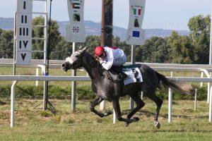 Manou Taouy Wins Wathba Stallions Cup