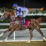SPAGHETTI Winner of AL DAAYEN CUP