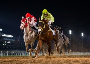 Goshawke over Mawahib in the 2200m R2Al Maktoum Challenge on 31-1-19