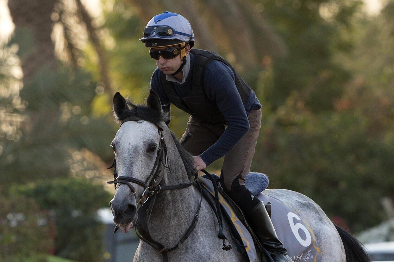 MASHHUR AL KHALEDIAH Credit: Jockey Club of Saudi Arabia // Mathea Kelley