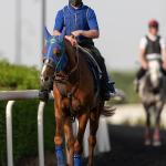 Hayyan (FR) DUBAI KAHAYLA CLASSIC (Credit DRC & Neville Hopwood) 260321