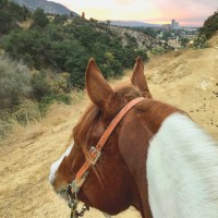 Discovering Ticks in My Horse's Ears
