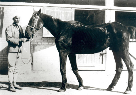 Old Bill - one of the first war horses rescued by Dorothy Brooke in 1931. His photo featured in her original appeal to the Morning Post (now Daily Telegraph) in 1931.