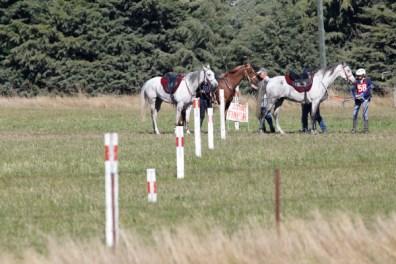 NZ-endurance-champs8335