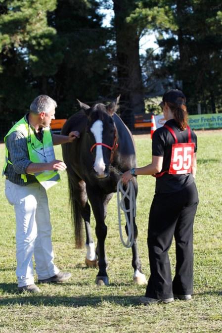 NZ-endurance-champs8607