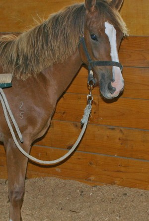 As well as keeping your stabled horse clean, grooming is an excellent way for you to spend time together and help pass the time for a sick horse.