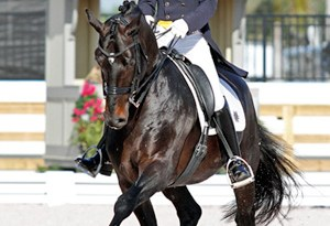 "David Marcus riding Chrevi's Capital won the Grand Prix and Grand Prix Special at the CDI3* Canada Classic held May 18-20 in Burlington, Ontario."" Photo Credit – Sue Stickle, www.susanjstickle.com"