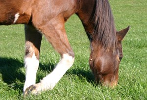 New Zealand research reveals the country has a significant number of stay-at-home horses.