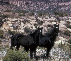 Wild horses in Colorado.