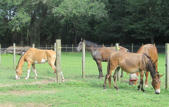 Settling in at Panhandle Equine Rescue.
