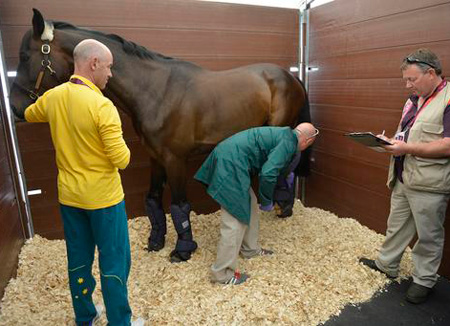 Rutherglen, the horse that triple Olympic gold medallist Andrew Hoy will ride for Australia, is checked by vets at the Equine Staging Facility before going on to Greenwich Park.