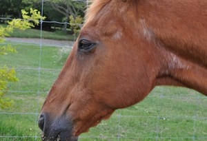 PPID, formerly termed Equine Cushing's Disease, results from a change in hormone regulation in the pituitary gland, which is situated just below the brain.