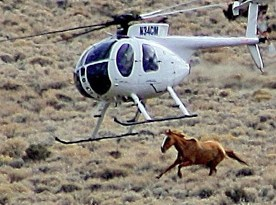 Image released by Wild Horse Education