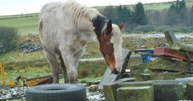 The horses in Bolton were treated for mange and other infections.