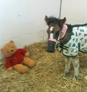 Teddy at the RVC. He has to wear a muzzle to stop him from eating the straw bedding.