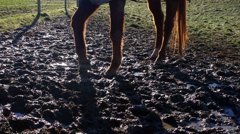 Standing in mud is bad for a horse's feet and can cause bacterial infections.