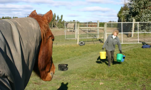 Feed accounts for a big chunk US equine retail sales, research shows.