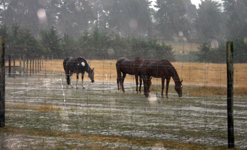 Good shelter in a paddock can make a huge difference to a horse's wellbeing and comfort, providing a windbreak on cold days and shade when it's hot.