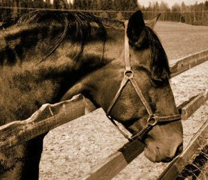 As well as being harmful to the horse, cribbing is also hard on fences.