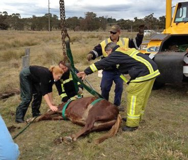Veterinary surgeon Kate Burnheim partially sedated Fuzz ahead of the rescue - he's checked once out of the well.