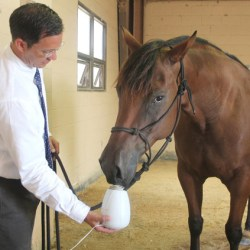 Dr Edward Ferguson, assistant professor of animal sciences at McNeese State University, uses lavender aromatherapy treatment on Tazer. A recent McNeese study suggests aromatherapy treatment works well on stressed horses and could benefit the equine industry.
