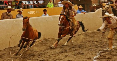 Horse tripping at a rodeo in Mexico.