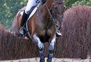 Tina Cook and Miner's Frolic, reserves for the British eventing team at the 2008 Olympics, won individual bronze.