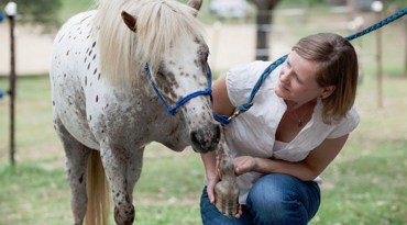 Melody de Laat is seeking the support of veterinarians and horse owners for a global survey.