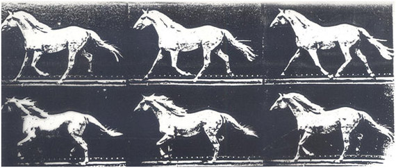 A segment from Eadweard Muybridge's Animals in motion study, from 1899.