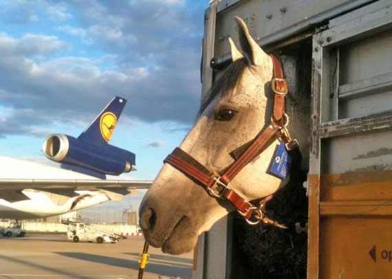 Horses will travel in style to Rio in 2016.