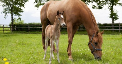 One of the foals born from frozen and genotyped embryos.