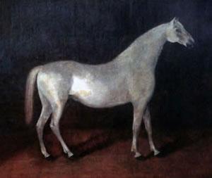 The grey Arabian stallion Smetanka is the ancestor of Orlov Trotters.